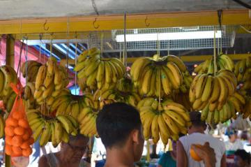 bananes suspendues